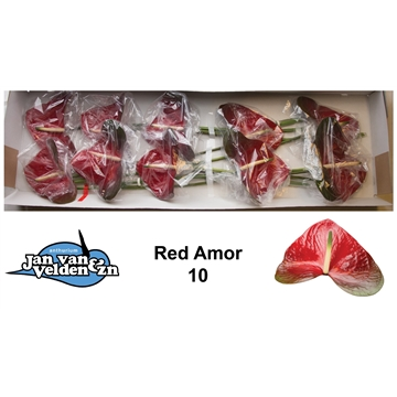 Red Amor 10
