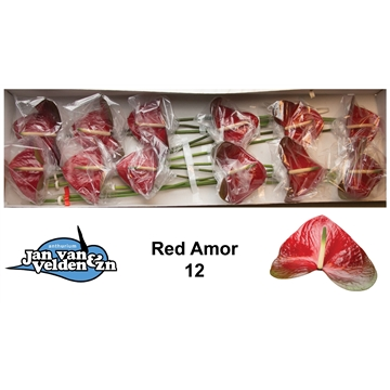 Red Amor 12
