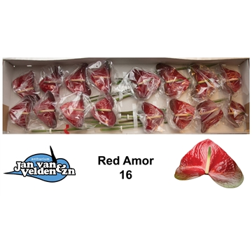 Red Amor 16
