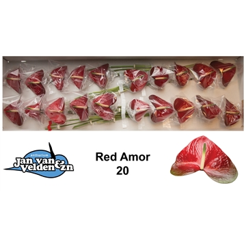 Red Amor 20