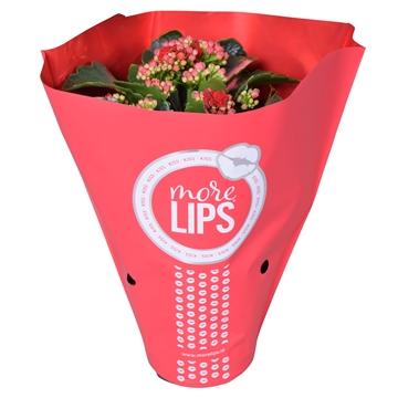MoreLIPS® Kalanchoe bloss. gevuld Calandiva Red in Metallic Hoes