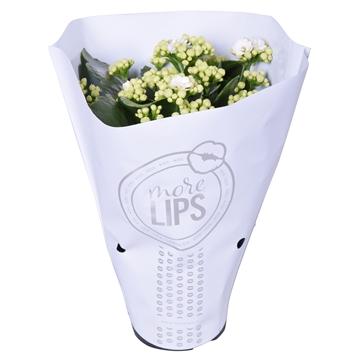 MoreLIPS® Kalanchoe bloss. gevuld Calandiva White in Metallic Hoes