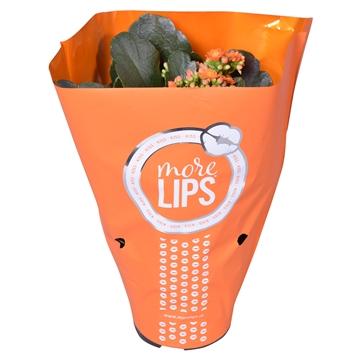 MoreLIPS® Kalanchoe bloss. gevuld Calandiva Orange in Metallic Hoes
