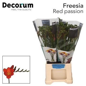 Fr en Red passionDecorum