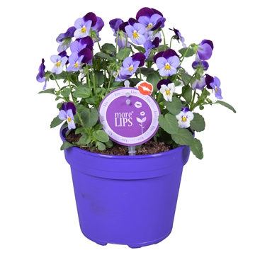 MoreLIPS® Viola Cornuta purple