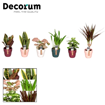 Collectie Passion - Keen on Green mix in pot Tiffany (Decorum)