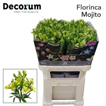 Flor Mojito
