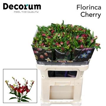 Flor Cherry