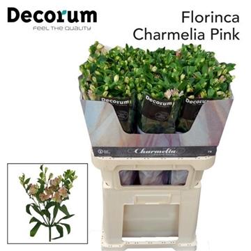 Flor Charmelia Pink