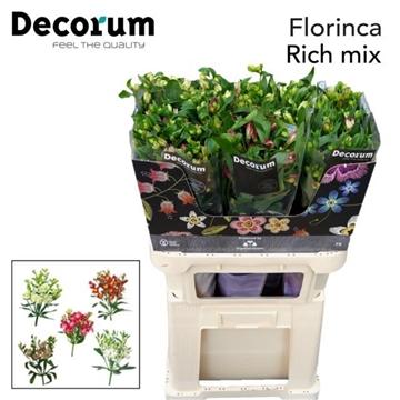Flor Rich Mix