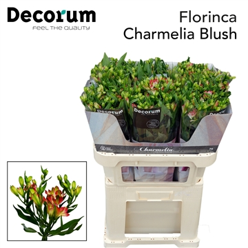 Flor Charmelia Blush