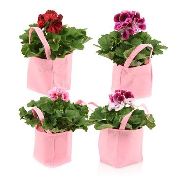 Collectie 'Reflections of Love' Pelargonium Grandiflorum Pink mix in Tas Vilt