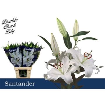 LI OR Santander 4+