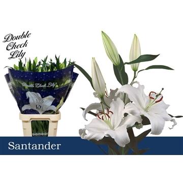 LI OR Santander 6+