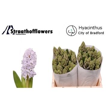 City of Bradford