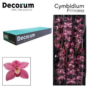 CYMB T PRINCESS Decorum 6