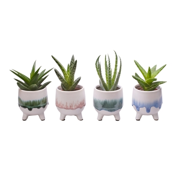 L 709 with Aloe Mix 6 cm