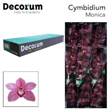 CYMB T MONICA Decorum 9