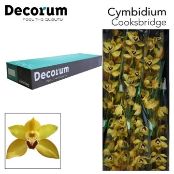 CYMB T COOKSBRIDGE Decorum 6