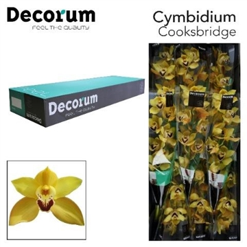 CYMB T COOKSBRIDGE Decorum 9