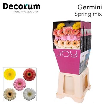 Ge Mi diamond Spring mix