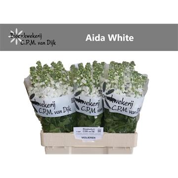 Aida White