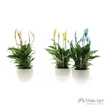 Spathiphyllum 13 cm 'Bellini®' Make-upz in wit keramiek