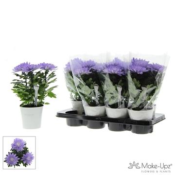 Chrysanne® Zembla Next White Make-Upz® Uno Purple in MU-pot