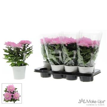Chrysanne® Zembla Next White Make-Upz® Uno Pink in MU-pot