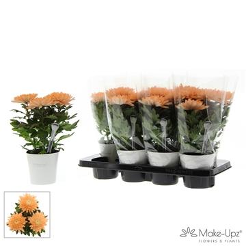Chrysanne® Zembla Next White Make-Upz® Uno Orange in MU-pot