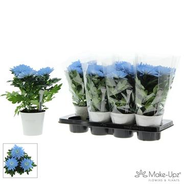 Chrysanne® Zembla Next White Make-Upz® Uno Blue in MU-pot