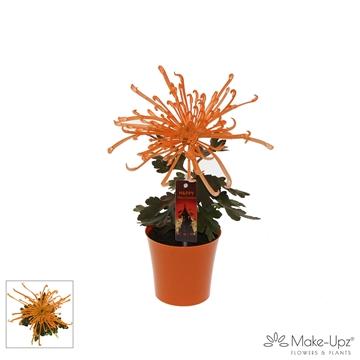 Chrysanne® Fireworks Cream Make-Upz® Uno Orange Halloween