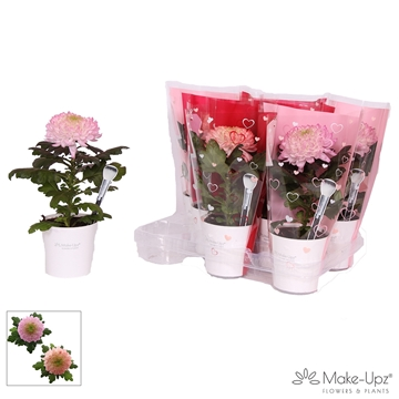 Chrysanne® Magnum White Make-Upz® Uno Red/Pink in MU-pot met Heart Hoes