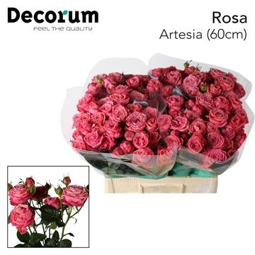 R TR Artesia