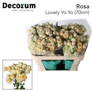 R TR Lovely Yo-Yo