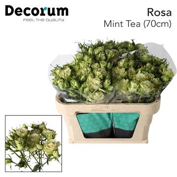 R Tr Mint Tea
