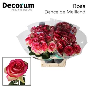 R G Bl. Dance de Meilland