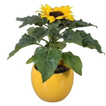 Helianthus 'Sunsation' in geel Lisa keramiek