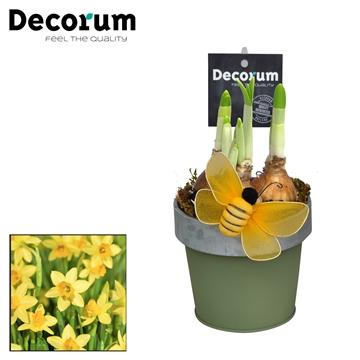 Narcis Bucket & Border Mini HL17513N