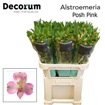 Alstr Posh Pink