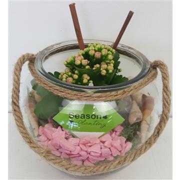 Arrangement glas bol met touw in roze opmaak