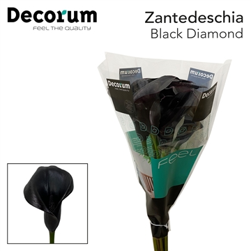 Zantedeschia Black Diamond