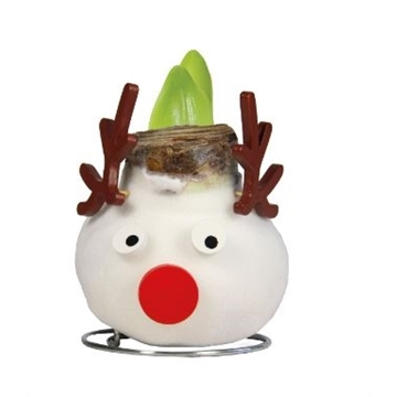 Amaryllis Touch of Wax Specialty, Reindeer Tray 236