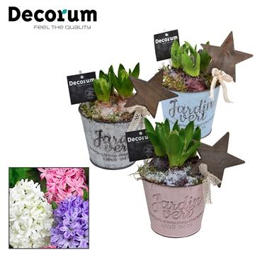 Hyacint Jardin HL19672 [LOVELY COLORS]