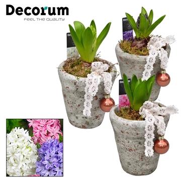Hyacint Belgisch Keramiek HL18362 [PURE]