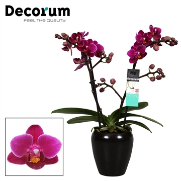 Decorum Purple princes 2 tak vertakt Keramiek