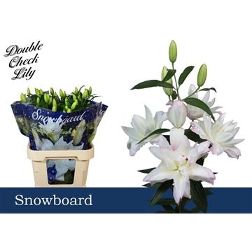 LI OR DU Snowboard 5+