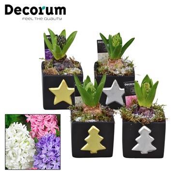 Hyacint Christmas Cube HL10992 [SHINY & SPARKLING]