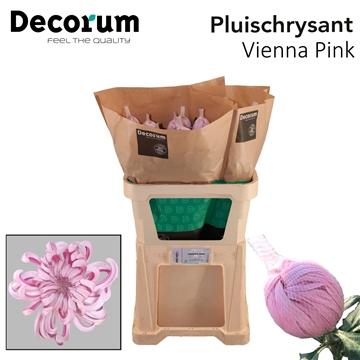 Chr G Vienna Pink