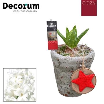 Hyacint Belgisch Keramiek HL18366WP [COZY]